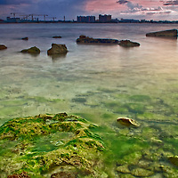 Green moss grows in the salty water of a sandy and rocky beach<br />