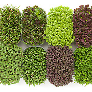 Micro leaves, First Choice Fruit & Produce