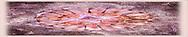 Stylized jellyfish<br /> Katmai National Park, <br /> Alaska<br /> <br /> 100% Habotai Silk custom-designed scarf - rolled hem - 14 X 72 inches