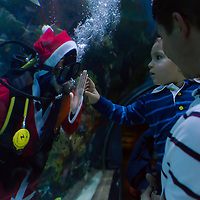 Child visitor watches a scuba diver in Santa Claus costume through glass as part of christmas celebration in Budapest, Hungary on December 06, 2012. ATTILA VOLGYI