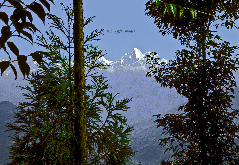 Langtang Himal range seen through distant mist and foreground trees at The Farm House, a small guest house at Nagarkot, Nepal, on the eastern side of the Kathmandu Valley.
