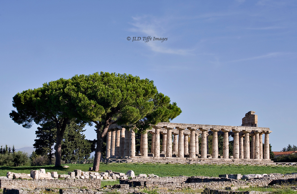 Italy, Magna Graecia : Paestum temples : temple of Athena or Ceres from the city ruins and wall stumps.  An umbrella pine dominates the area.