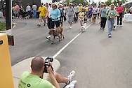 And they're off!  The Humane Society of Greater Dayton's Furry Skurry gets underway at Miami Valley Hospital South in Centerville, Saturday, May 12, 2012.
