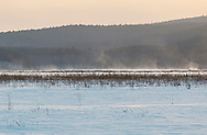 Mamakating, New York - Snow covers the Bashakill wetlands and is blown by strong winds in the background on Feb. 15, 2015.