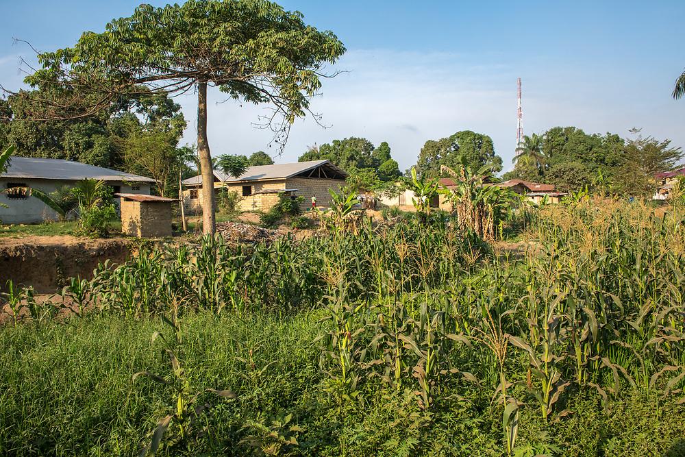 A farm in Ganta, Liberia