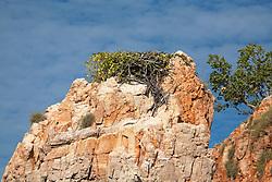 Osprey nest lined with vegetation in Talbot Bay.