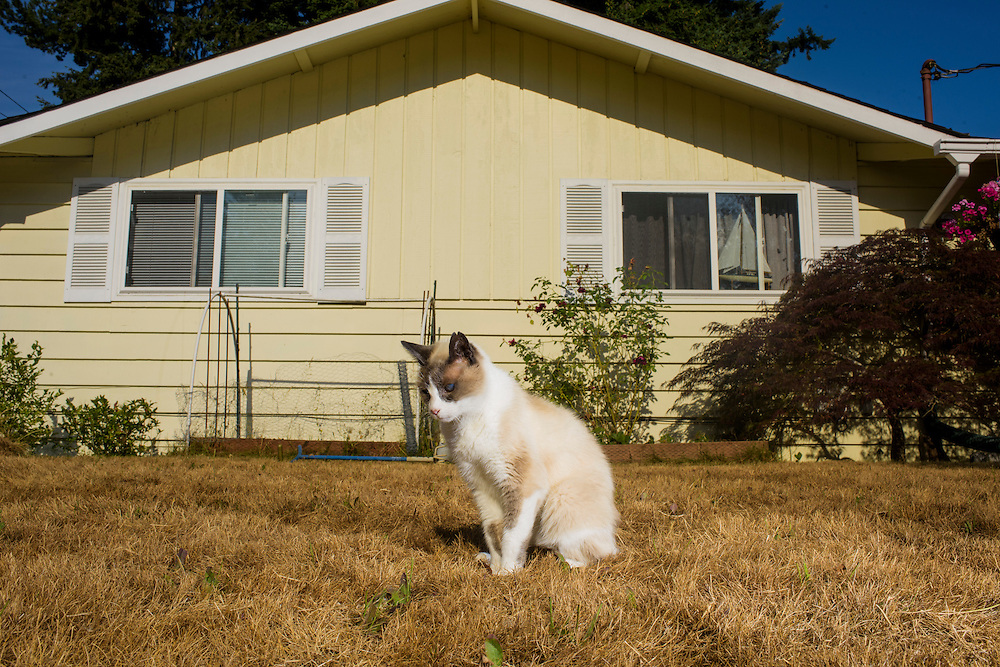 Mountlake Terrace, Washington - July 13, 2015: Diamond, the former head of &Uuml;berstadt's leading conservative faction, The Cat Party, stands outside the &Uuml;berstadt capitol, Rosewood. &quot;Now &Uuml;berstadt is a direct democracy, making parties irrelevant,&quot; says King Adam I. Now Diamond is free to do is favorite things, which are hang around outside and &quot;lick himself.&quot;<br /> <br /> The Kingdom of &Uuml;berstadt is led by nineteen-year-old King Adam I, (Adam Oberstadt). The Barony of Rosewood -- the micronation's capitol and the Oberstadt family home -- is nestled in the Seattle suburb of Mountlake Terrace, Wash. <br /> &Uuml;berstadt also claims territory of nearby Edmount Island on Lake Ballinger -- called The Barony of Ballinger and &quot;considered the spiritual homeland of the nation.&quot; Both baronies reside within the Duchy of Edmount which &quot;is situated entirely within the boundaries of the city of Mountlake Terrace, Washington,&quot; according to the &Uuml;berstadt website.<br /> &Uuml;berstadt  was founded by King Adam I and his high school friends March 6, 2010, and was governed by judges as a kritarchy. Before taking the crown, Adam was &Uuml;berstadt's chief judge. After graduation, many of the &Uuml;berstadti moved away to college and &Uuml;berstadt's populace shrank. Activities would shift from the high school to Rosewood, and the governing style morphed to a unitary constitutional monarchy. According to the micronation's website &Uuml;berstadt is a sovereign state &quot;guided by the principles of direct democracy, socialist economics, and environmentalism.&quot; <br /> <br /> CREDIT: Matt Roth