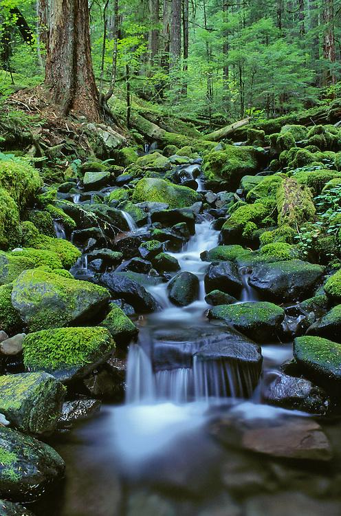 Cascading stream along Sol Duc Falls Trail; Olympic National Park, Washington..