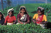 Sri Lanka - Tea Plantations & the Hill Country