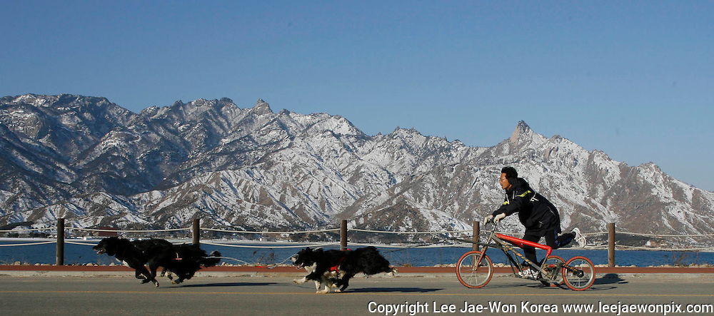 A South Korean dog sled racer competes in the first dog sled race held in North Korea at Mount Kumgang, North Korea February 17, 2008. About 35 teams took part in the event held at a mountain resort run by an affiliate of the South's Hyundai Group. Due to a lack of snow, the racers used sleds mounted on wheels and competed on a coastal road with the Diamond Mountain range in the background. /Lee Jae-Won