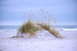Dune Study #3, Wrightsville Beach, North Carolina