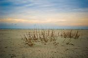 Vegetation growing on sand flats at sunrise in Pawleys Island, South Carolina.