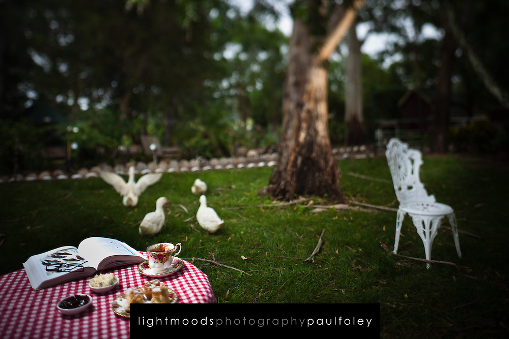 Afternoon Tea with ducks in a garden