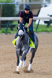 Derby 142 hopeful Destin with Ovel Merida up were on the track for training, Monday, May 02, 2016 at Churchill Downs in Louisville.