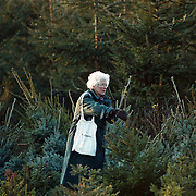 Kerstbomen verkoop Ceintuurbaan tuincentrum Rebel