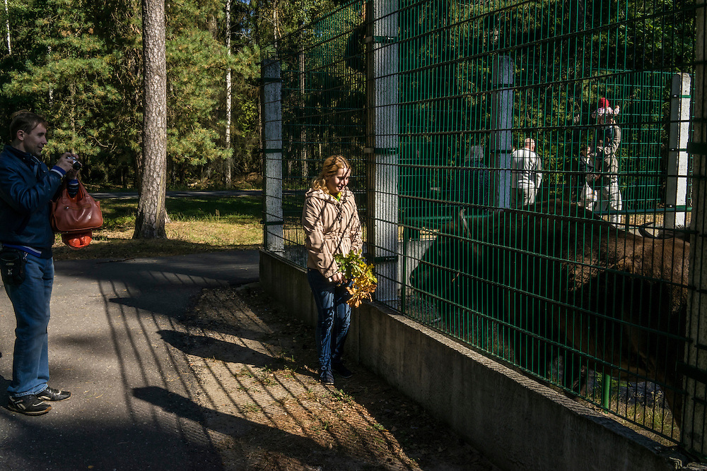 People pose for photographs with captive European bison on Sunday, September 18, 2016 in Belozhevskaya Pushcha National Park near Kamieniuki, Belarus.