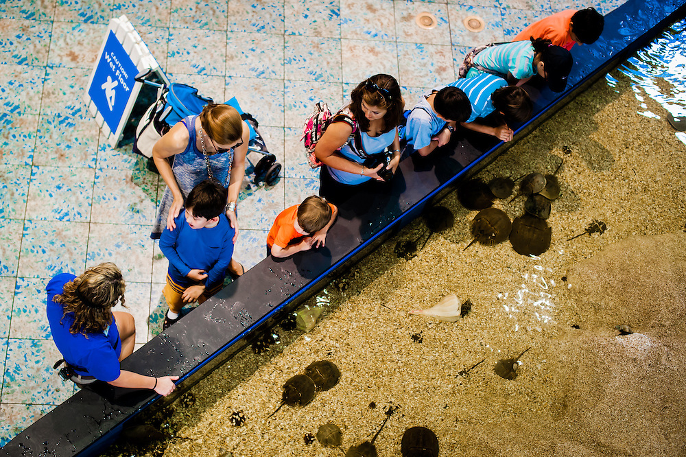 TAMPA, FL -- Families check out the horseshoe crabs at the Florida Aquarium in Tampa, Florida.  The aquarium boast numerous exhibits and ecosystems such as the Wetlands Trail, Bays and Beaches, Coral Reef, and Ocean Commotion.  (Photo / Chip Litherland)