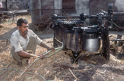 Man operating machinery to extract the juice from sugar cane,