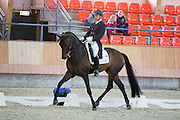 Bart Veeze - Brown Boy<br /> KNHS Indoorkampioenschappen 2015<br /> © DigiShots