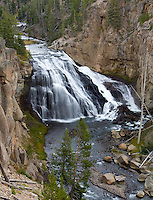 Gibbon Falls drops 84 feet along the Gibbon River in Yellowstoen National Park