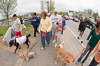 Jean O'Rourke of Laconia was one of the hundreds who brought their dogs to BOW WOW Fest 2011 Saturday morning starting from the Elm Street Lakeport Square entrance.  (Karen Bobotas/for the Laconia Daily Sun)