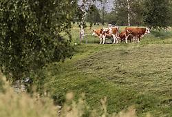 THEMENBILD - eine Kuhherde steht um den Wassertank, aufgenommen am 10. Juni 2019 in Kaprun, Österreich // a herd of cows stands around the water tank, Kaprun, Austria on 2019/06/10. EXPA Pictures © 2019, PhotoCredit: EXPA/ JFK