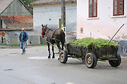 Romania, man transports fodder in a horse and cart