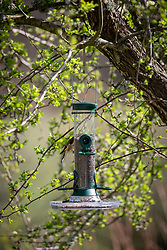 Bird seed feeder with goldfinch