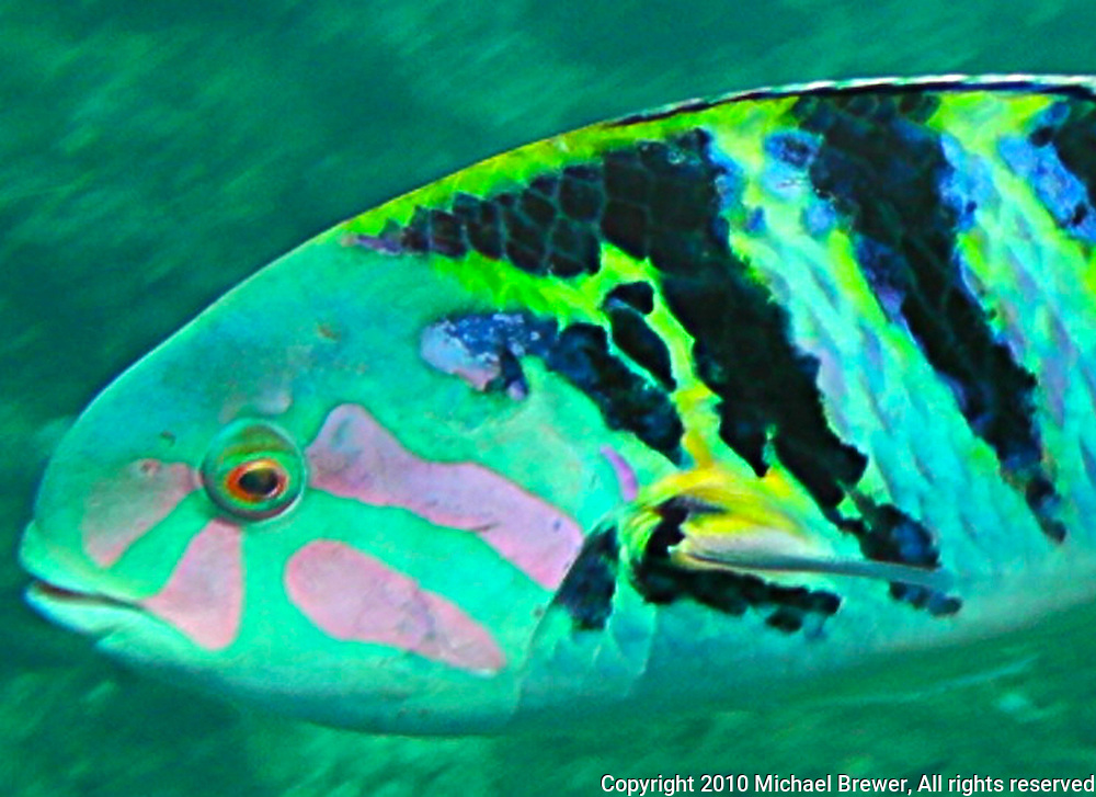 Dazzling rainbow fish from a reef in Bali, Indonesia.