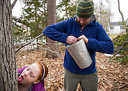 Tree Tapping - Maple Syrup Season