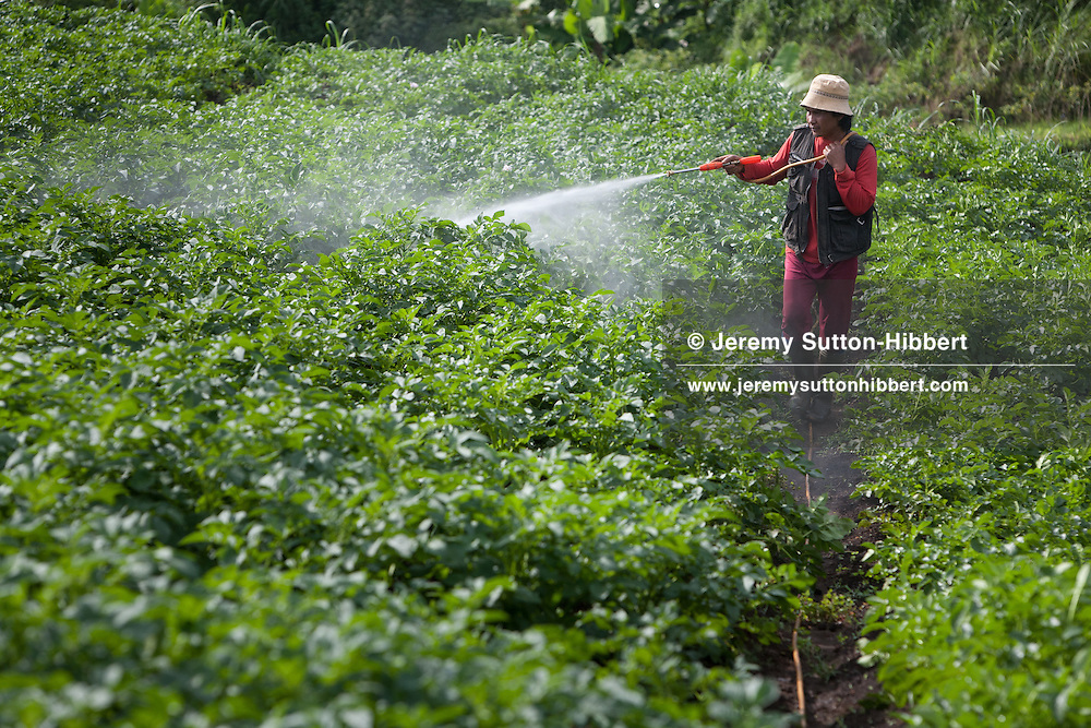 Spraying pesticides onto crops in Cibeureum village, beside the Citarum river and near to the spring source of the Citarum, in Bandung district, in Western Java province, Indonesia, Wednesday 27th October 2010.