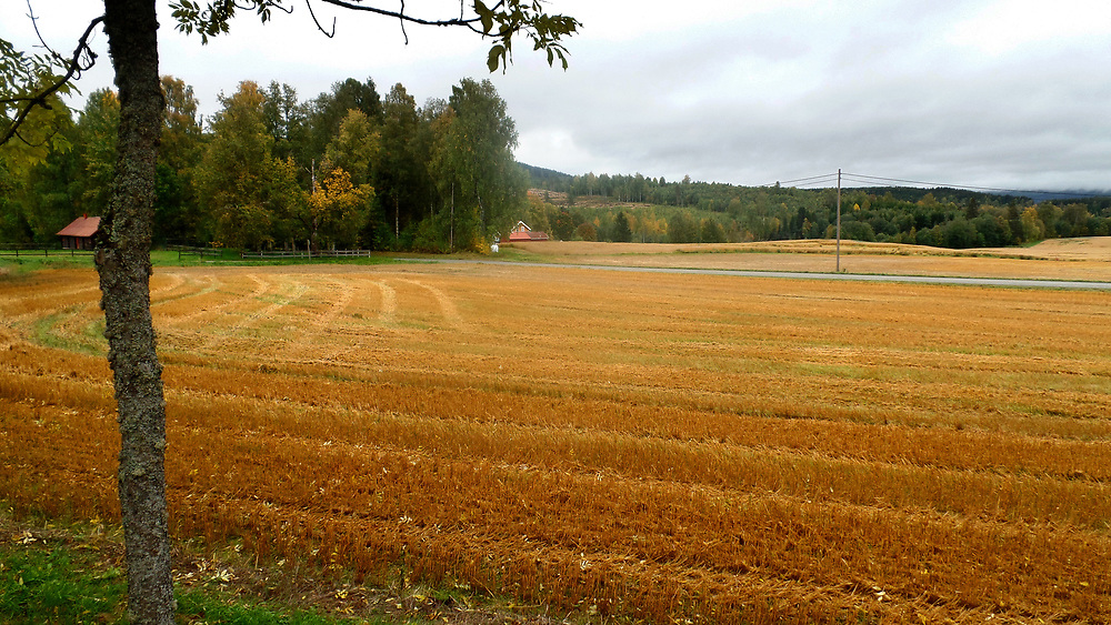 Farm field in Norway ©Tonje Ingebrethsen/ Moro Foto