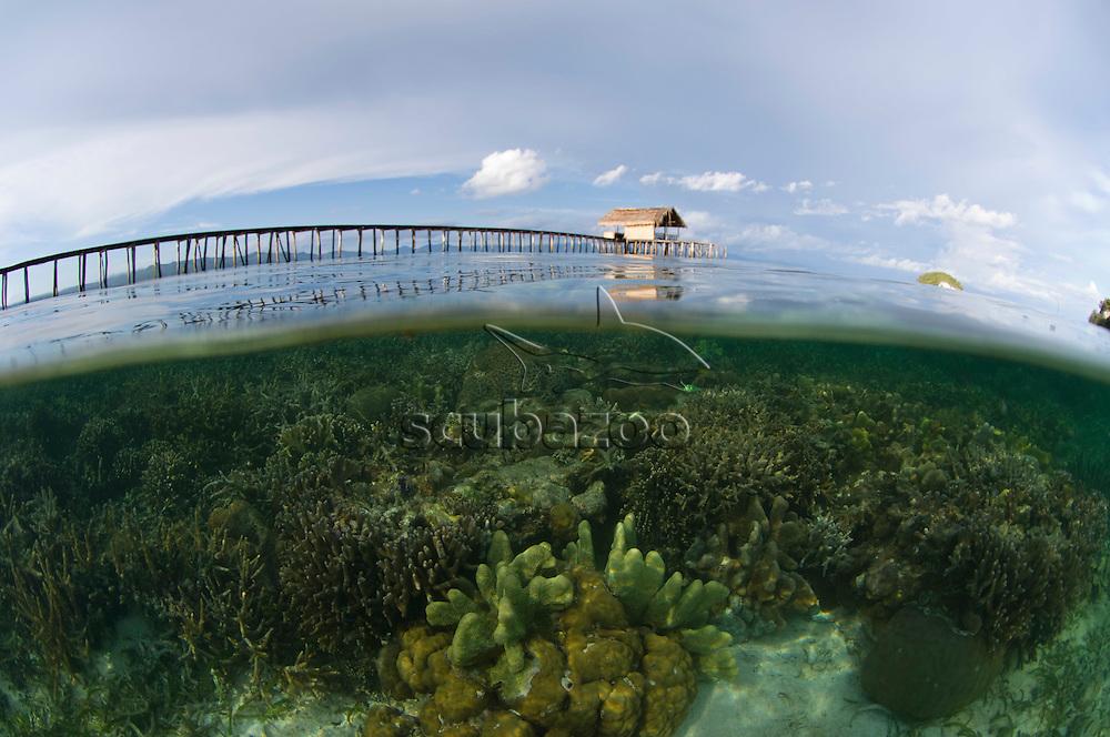 Split shot showing coral reef below water, Raja Ampat Islands, West Papua, Indonesia.
