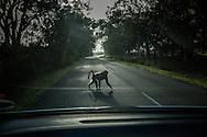 Baboon crosses a highway with a swagger.  <br /> <br /> In Cape Town, wildlife is never far away and the rugged coast draws in visitors from all over the planet.