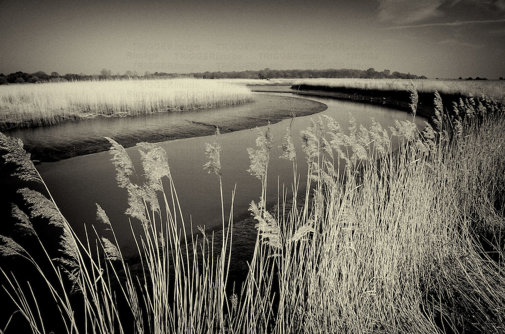 Rural landscape scene with river and reed beds on clear day at Snape Maltings in Suffolk, England