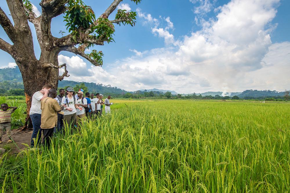 Tourist visit African rice (Oryza glaberrima) field in Gbedin village, Nimba County , Liberia.