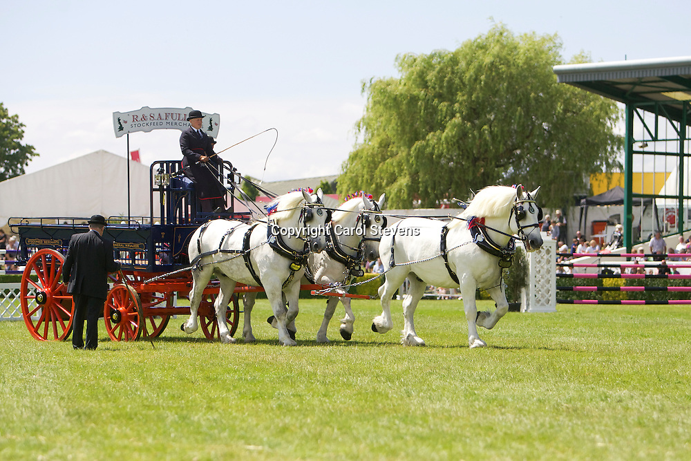 Mary Fuller and Dick Fuller's grey gelding Percherons Team of Earl, Lightning &amp; Andy<br /> 4th in the Team Turnout Class