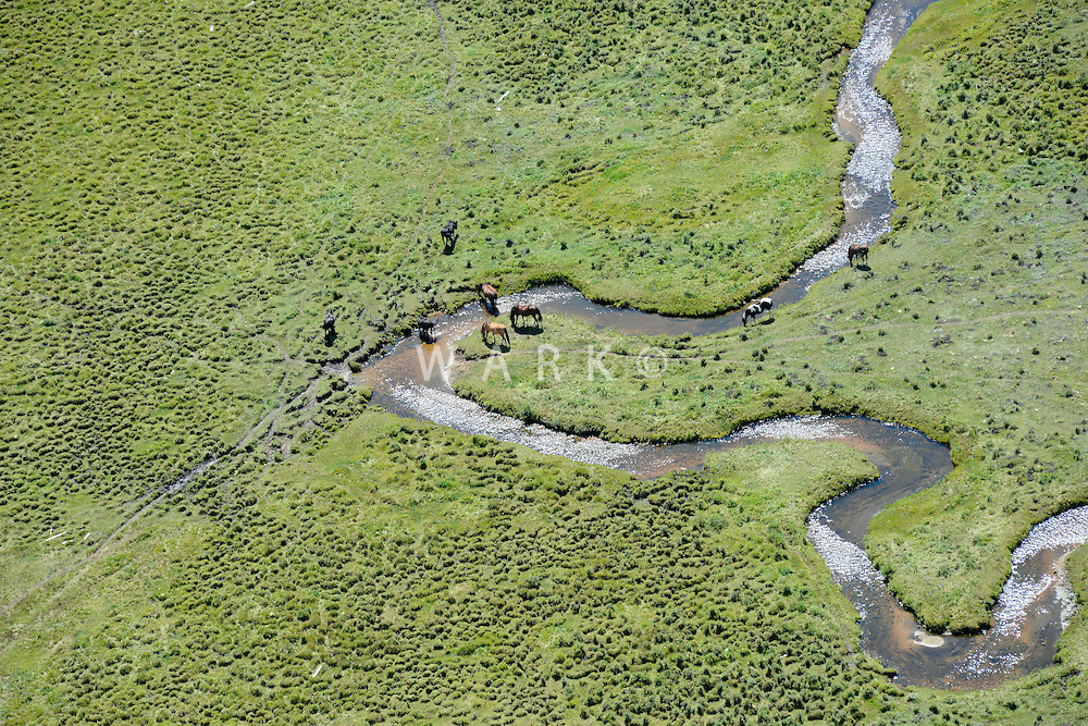 Horses grazing with mountain valley stream.  Near Jefferson, Colorado.  Sept 2013. 82573