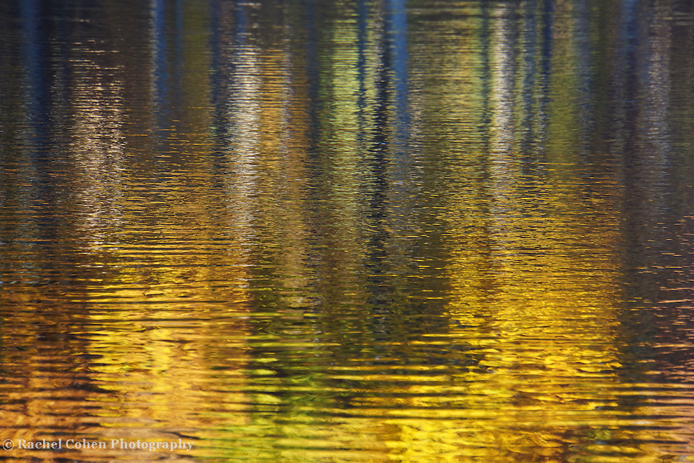 &quot;Striking Gold&quot; <br />