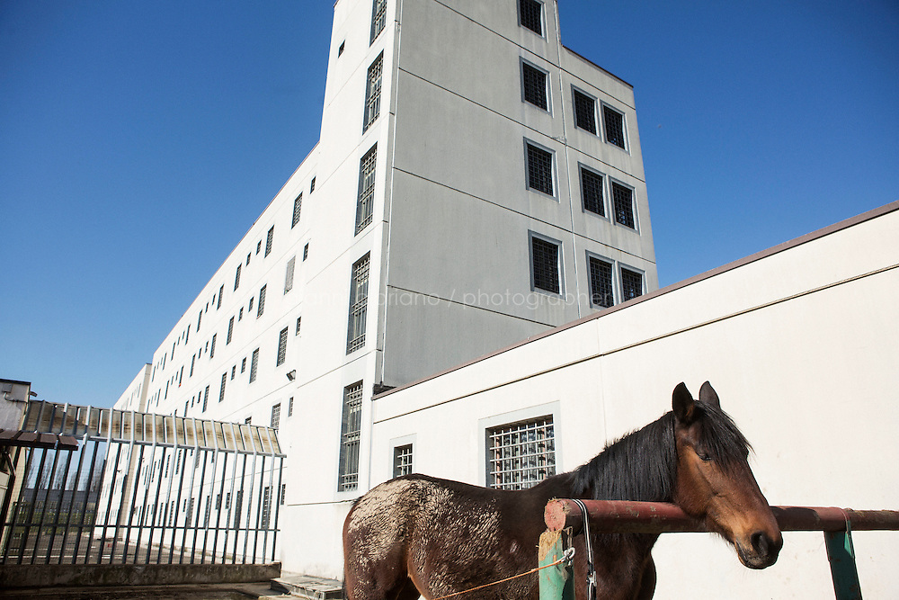 MILANO, ITALY - 1 MARCH 2016: A horse is here in the stables of the Bollate prison next to the detention building in Milan, Italy, on March 1st 2016.<br /> <br /> The Bollate prison is known for being a good example of penitentiary administration. The inmates are free to move around from one area to the other inside the prison (their cells open at 7:30am and close at 9pm) to go study, exercise in a gym, or work (in a call center, as scenographers, tailors, gardeners, cooks, typographers, among others)  in one of the 11 co-operatives inside the prison or in one of the private partnering businesses outside the prison. The turnover of the co-operatives that work inside the prison was &euro;2mln in 2012.<br /> <br /> The philosophy of the prison is to make inmates responsible. The recidivity of the Bollate prison is low (approximately 20%) compared to the national average of Italian prison, which is about 65%.<br /> <br /> In October 2015, the prison and the co-operative ABS La Sapienza inaugurated &quot;InGalera&quot; (which translates in English as &quot;InJail&quot;), the first restaurant located inside a prison and offering high-quality cooking to the public and a future to the inmates. It is open five days a week for lunch and dinner, and seats 55 people. There are 9 people involved in the project, including cooks and waiters, all regularly employed and all inmates of the prison, apart from the chef and the ma&icirc;tre d&rsquo;h&ocirc;tel, recruited from outside to guarantee the high quality of the food served. The restaurant is a project of the co-operative ABC La Sapienza - that operates inside the prison and provides more than 1,000 meals three times a day with the help of inmates they've hired - and of PwC, a multinational operating in the field of corporate consultancy. The goal of this project is to follow prisoners in rehabilitation process of social inclusion.