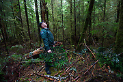 "DNR officer Jared Eison follows a trail marked by trees cut with machetes to a theft site where Doug fir that have been stripped of their branches for holiday wreaths. Eisen sniffs. ""Smells like Christmas,"" he says."