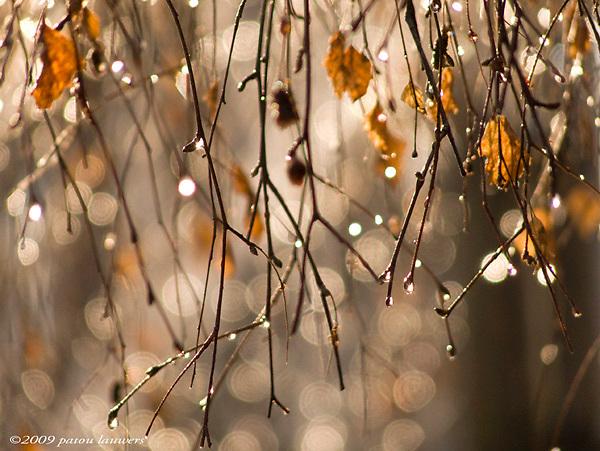 raindrops on twigs