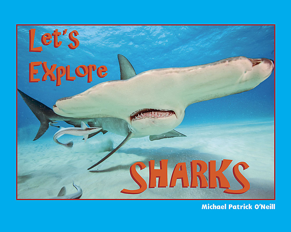 Dive – if you dare – into the wonderful world of sharks!<br />