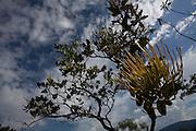 Sao Goncalo do Rio Preto_MG, Brasil...Parque Estadual do Rio Preto, em Sao Goncalo do Rio Preto, Minas Gerais. Na foto detalhe de uma flor...The Rio Preto State Park, in Sao Goncalo do Rio Preto, Minas Gerais. In this photo a flower...Foto: LEO DRUMOND / NITRO