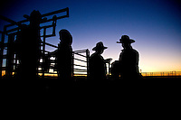 Brunette Downs Cattle Station is situated on the Barkley tablelands in Australia's Northern Territory. One of Australia's largest cattle stations..Early morning drafting after waking from stock camp.