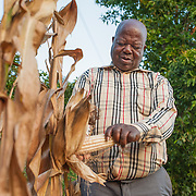CAPTION: Simon harvests maize (corn) from one of the plants in his garden. The irrigation scheme will help farmers like him move beyond subsistence farming, as they will be able to produce and sell surplus crops for cash income. LOCATION: Ndimo Village, Bikita District, Masvingo Province, Zimbabwe. INDIVIDUAL(S) PHOTOGRAPHED: Simon Munikwa.