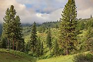 Western Idaho black bear country.
