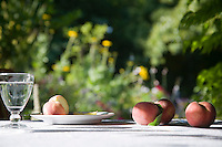 Peaches on table in garden
