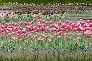 Hamptonburgh, New York - Flowers and trees are blooming at the Orange County Arboretum at Thomas Bull Memorial Park on May 4, 2017.