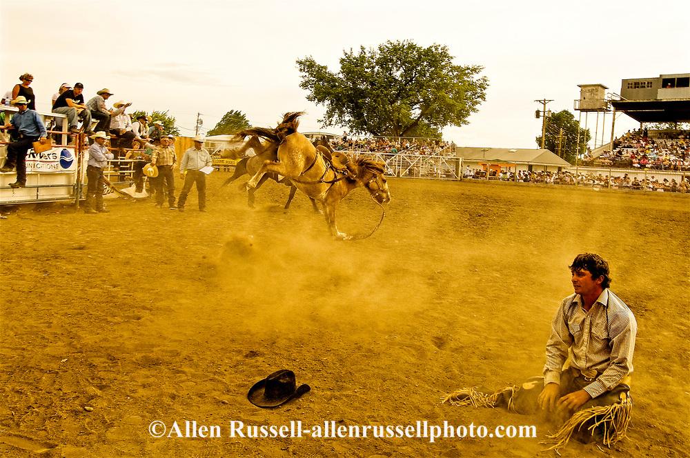 Saddle bronc rider bucked off at Miles City Bucking Horse Sale, Miles City Montana